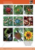 Erleben der Jahreszeiten mit allen Sinnen: Herbst Preview 22