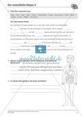 Anatomie: Körperteile und Organe Preview 6