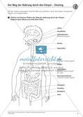 Verdauung: Weg der Nahrung durch den Körper Preview 4