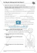 Verdauung: Weg der Nahrung durch den Körper Preview 6