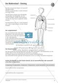 Anatomie: Blutkreislauf Preview 4
