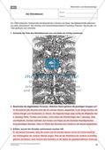 Die frühe Neuzeit: Die Reformation und die Glaubenskriege Preview 18