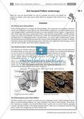 Bodentiere und Streuabbau im Wald Preview 1
