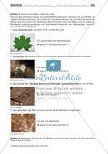 Bodentiere und Streuabbau im Wald Preview 4