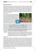 Bodentiere und Streuabbau im Wald Preview 5