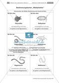Bestimmung von Bodentieren Preview 4