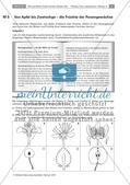Die Entstehung der Frucht aus der Blüte Preview 9