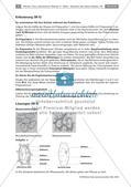 Erforschen von Zellen: Tierische und pflanzliche Zellen Preview 2
