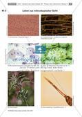 Erforschen von Zellen: Tierische und pflanzliche Zellen Preview 3