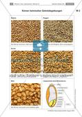 Getreide: Getreidegattungen Preview 3
