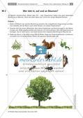Der Baum: Messen der Höhe, Artenkenntnis, Bewohner Preview 5