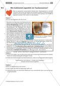 Energieumsatz bei chemischen Reaktionen Preview 2