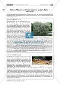 Das Fließgewässer Bach: Pflanzen und Tiere Preview 2
