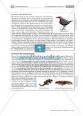 Das Fließgewässer Bach: Pflanzen und Tiere Preview 3