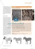 Es flimmert vor den Augen! - Optische Täuschungen in schwarz-weißen Bildern Preview 3