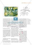 """Insekten entdecken - """"Kleine Tiere"""" im Kunstunterricht der Grundschule Preview 2"""