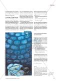 Biografisches Lernen als Zugang zur Josefsgeschichte Preview 4
