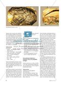 """Magisches Amulett aus """"Gold"""" - Das Lieblingstier als Schmuckrelief herstellen Preview 3"""