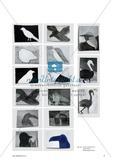 Rara avis in terris – ein seltener Vogel auf Erden: Eine Übungssequenz für die Klasse 8 Preview 3