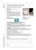 Wie bleibt das Wasser in der Windel? - Superabsorbierende Polymere als Modellsubstanz zur Erarbeitung von Struktur-Eigenschafts-Beziehungen Preview 4