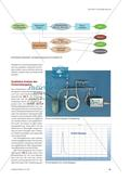 Energie aus Zuckerrüben - Herstellung von Wasserstoff und Nachweis durch Gaschromatografie Preview 2