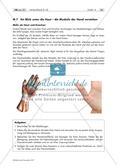 Aufbau der Hand – Hände als grafischer Gestaltungsanlass Preview 4