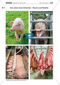 Grundlegende Informationen zum Veggie Day und Fleischkonsum Preview 1