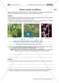 Untersuchen von Kletterpflanzen Preview 11