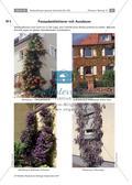 Untersuchen von Kletterpflanzen Preview 14