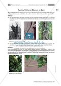 Untersuchen von Kletterpflanzen Preview 17