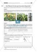 Untersuchen von Kletterpflanzen Preview 6