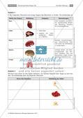 Zellen und Zellorganellen: Stationenarbeit Preview 2