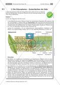 Zellen und Zellorganellen: Stationenarbeit Preview 6