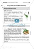 Heilpflanzen: Steckbrief Preview 4