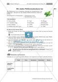 Heilpflanzen: Herstellen von Hustenbonbons Preview 4