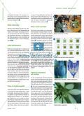 Was will die Biene von der Blüte? - Botanik auf Umwegen Preview 2