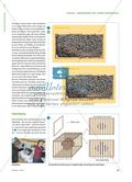 Begegnung mit einem Bienenvolk - Das Leben im Bienenstock erkunden Preview 2