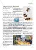 """Wie eine Schule auf die Biene kam - Das Projekt """"Sommerbienen"""" Preview 2"""