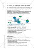 Ein Enzym-Modell - Bau und Wirkungsweise des Enzyms Maltase veranschaulichen Preview 2