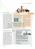 Hund, Hamster oder Gecko? - Einen Haustier-Ratgeber gestalten Preview 2