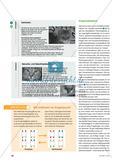 """Sinne der Katze – methodisch: Ein Gruppenpuzzle zum Thema """"Sinnesleistungen und Körperbau von Katzen"""" Preview 3"""