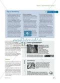 """Sinne der Katze – methodisch: Ein Gruppenpuzzle zum Thema """"Sinnesleistungen und Körperbau von Katzen"""" Preview 4"""