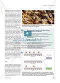 Bienen und Krebsforschung - Ein anspruchsvolles individuelles Lernangebot zur Epigenetik Preview 2
