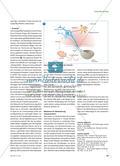 Wie die Umwelt Gene beeinflusst - Die Epigenetik revolutioniert nicht nur die Biologie Preview 4