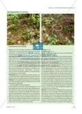 Nahrungsnetz und Spinnennetz - Naturerfahrungsspiele für ein ganzheitliches Naturverständnis Preview 4