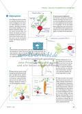 Welche Pflanzenteile essen wir? - Obst und Gemüse untersuchen Preview 4