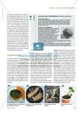 Pflanzenvermehrung ganz ohne Samen? - Vegetative Vermehrung an verschiedenen Pflanzen untersuchen Preview 2