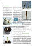 Pflanzenvermehrung ganz ohne Samen? - Vegetative Vermehrung an verschiedenen Pflanzen untersuchen Preview 3