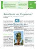 Haben Bäume eine Wasserpumpe? - Den Wasserhaushalt von Pflanzen experimentell erforschen Preview 1