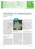 Doldenblütler als Insektenmagneten - Pflanzen schaffen Lebensraum Preview 1